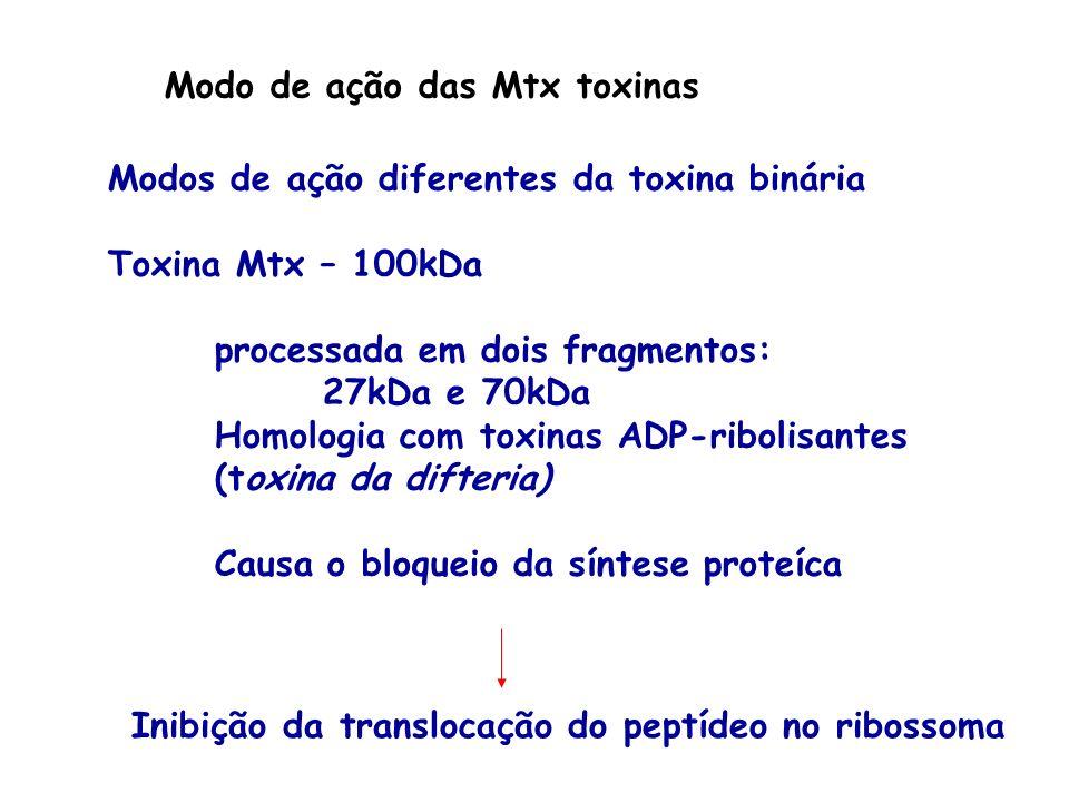 Modo de ação das Mtx toxinas Modos de ação diferentes da toxina binária Toxina Mtx – 100kDa processada em dois fragmentos: 27kDa e 70kDa Homologia com