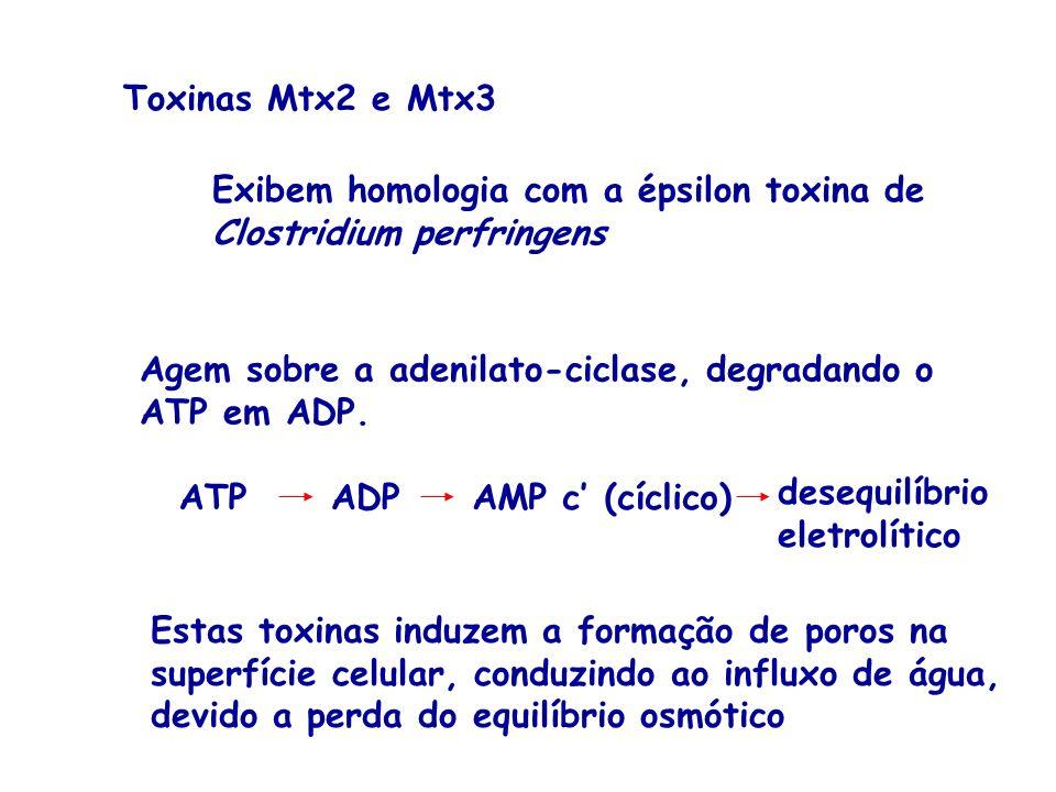Toxinas Mtx2 e Mtx3 Exibem homologia com a épsilon toxina de Clostridium perfringens Agem sobre a adenilato-ciclase, degradando o ATP em ADP. ATPADPAM