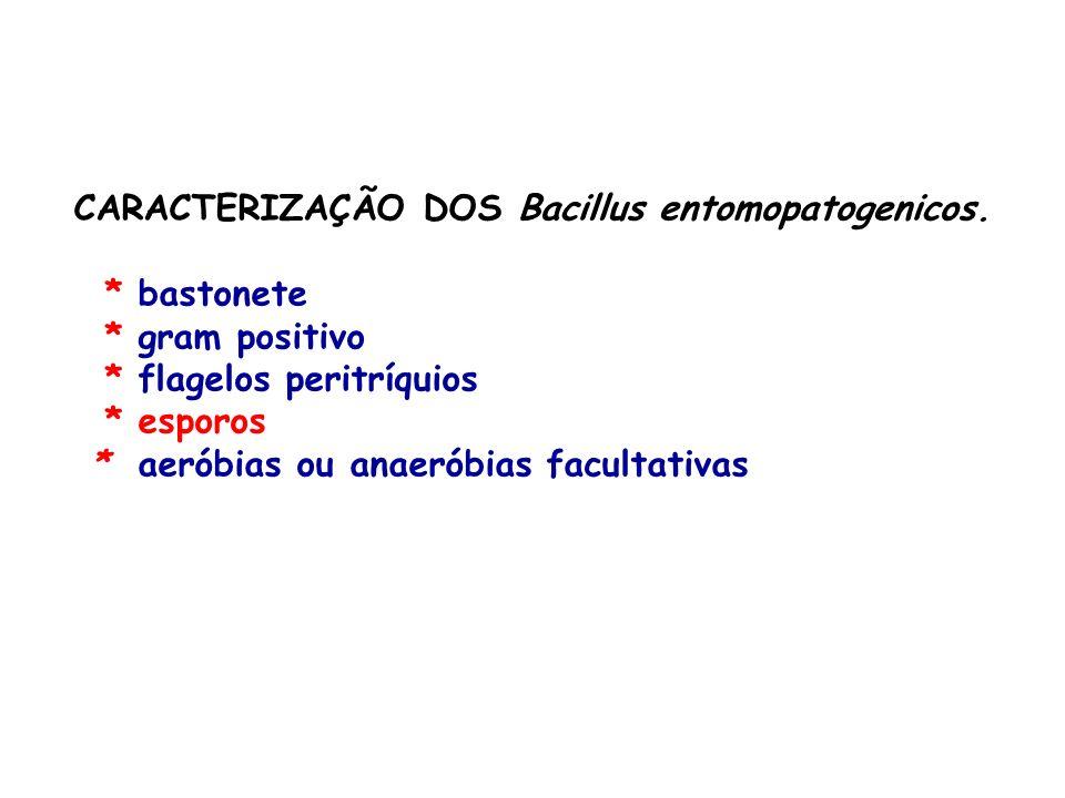 CARACTERIZAÇÃO DOS Bacillus entomopatogenicos. * bastonete * gram positivo * flagelos peritríquios * esporos * aeróbias ou anaeróbias facultativas