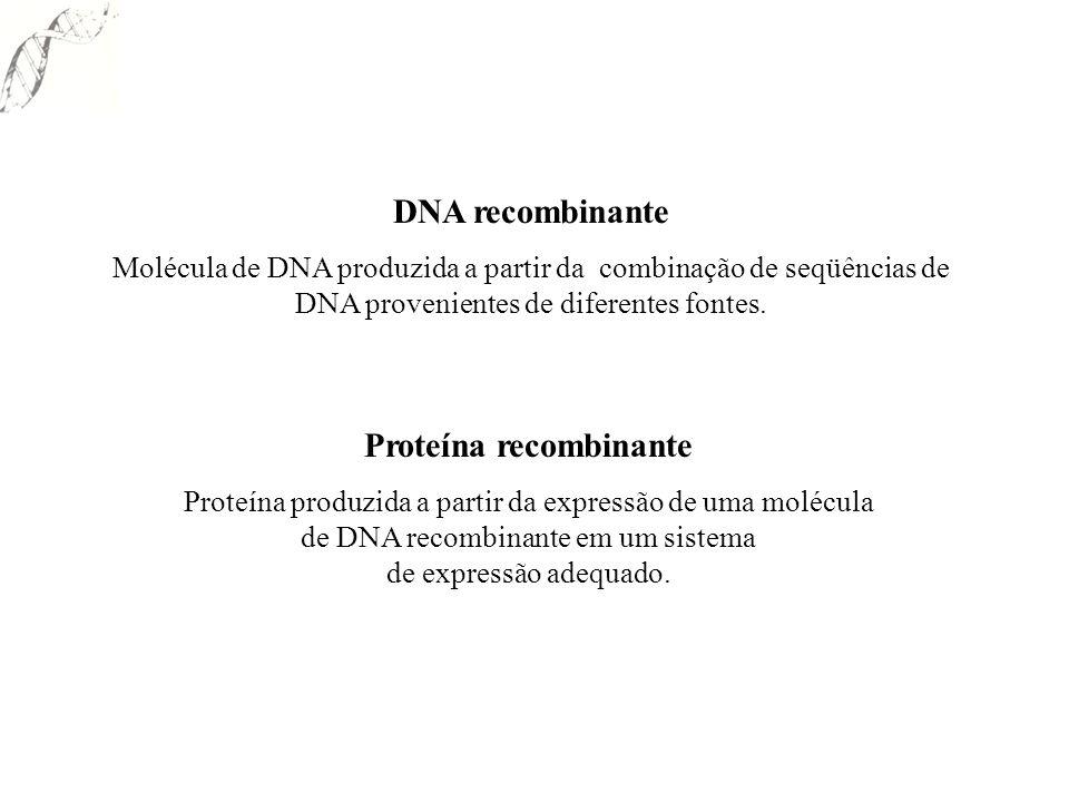 Proteína recombinante Proteína produzida a partir da expressão de uma molécula de DNA recombinante em um sistema de expressão adequado. DNA recombinan
