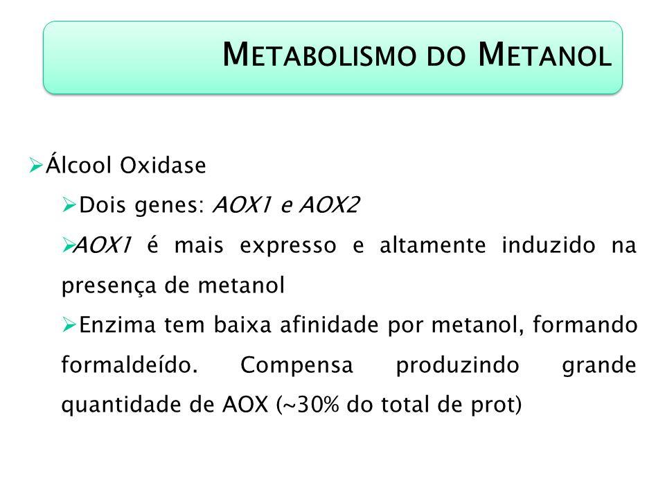 M ETABOLISMO DO M ETANOL Álcool Oxidase Dois genes: AOX1 e AOX2 AOX1 é mais expresso e altamente induzido na presença de metanol Enzima tem baixa afin