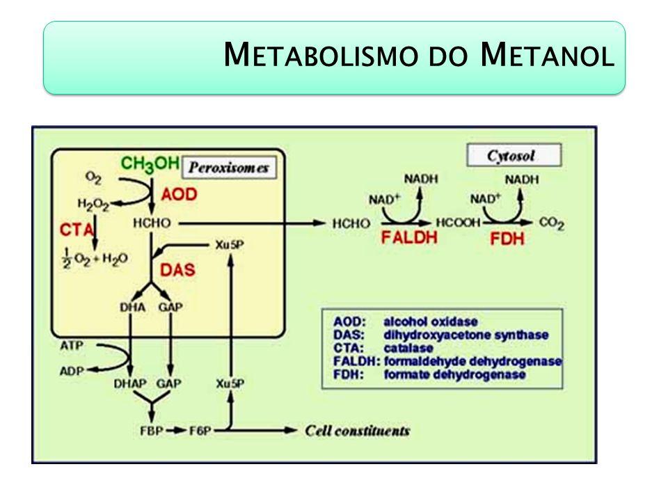 M ETABOLISMO DO M ETANOL