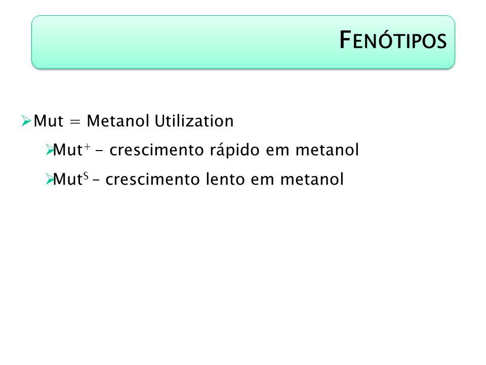 F ENÓTIPOS Mut = Metanol Utilization Mut + - crescimento rápido em metanol Mut S – crescimento lento em metanol