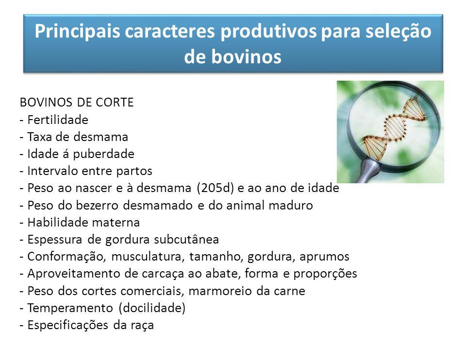 Principais caracteres produtivos para seleção de bovinos BOVINOS DE CORTE - Fertilidade - Taxa de desmama - Idade á puberdade - Intervalo entre partos