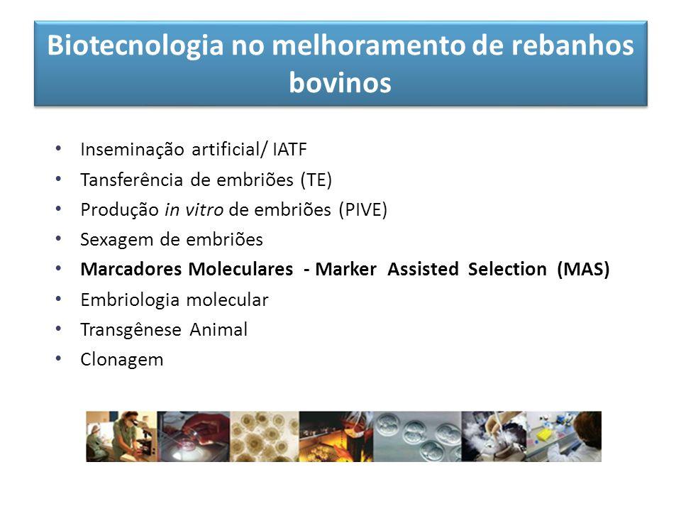 Biotecnologia no melhoramento de rebanhos bovinos Inseminação artificial/ IATF Tansferência de embriões (TE) Produção in vitro de embriões (PIVE) Sexa