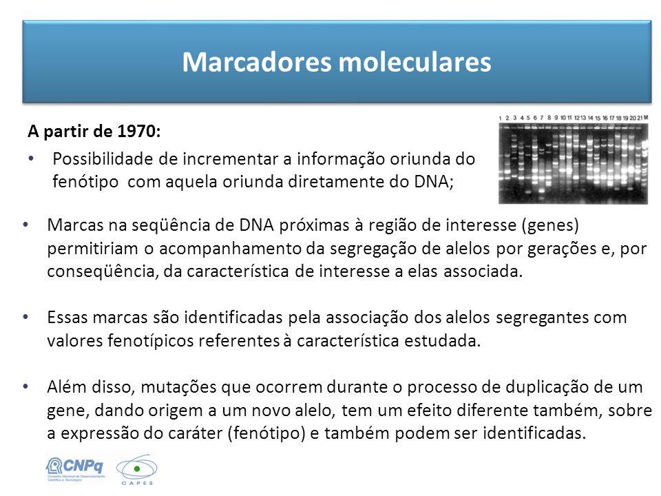 Marcadores moleculares A partir de 1970: Possibilidade de incrementar a informação oriunda do fenótipo com aquela oriunda diretamente do DNA; Marcas n