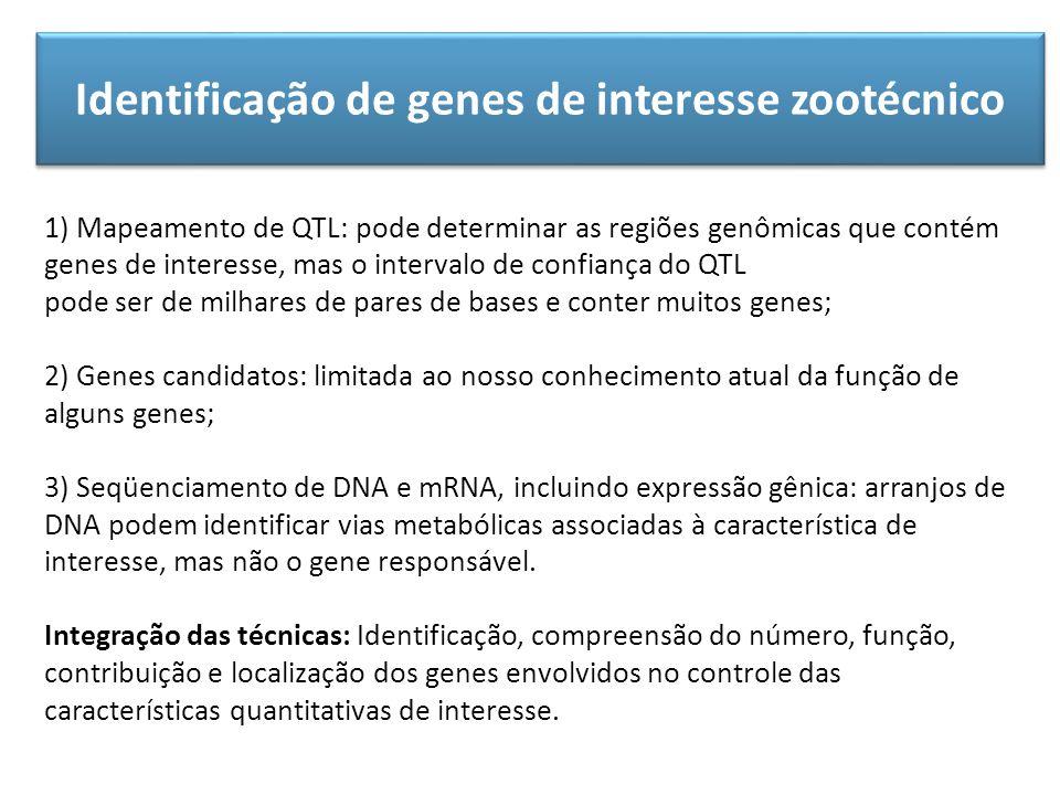 Identificação de genes de interesse zootécnico 1) Mapeamento de QTL: pode determinar as regiões genômicas que contém genes de interesse, mas o interva