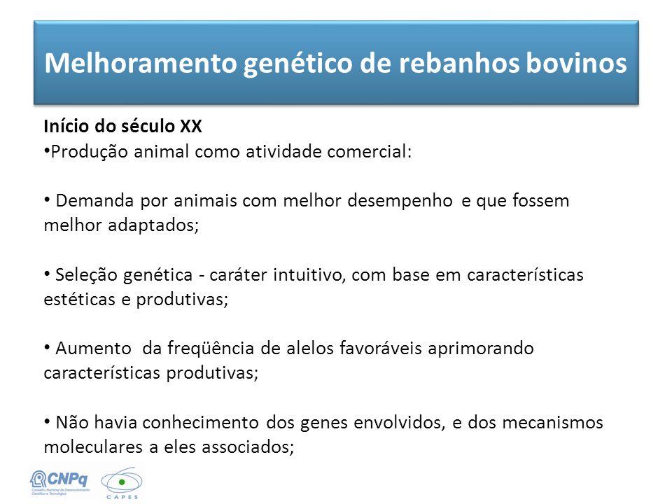 Melhoramento genético de rebanhos bovinos Início do século XX Produção animal como atividade comercial: Demanda por animais com melhor desempenho e qu