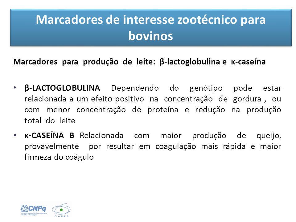 Marcadores de interesse zootécnico para bovinos Marcadores para produção de leite: β-lactoglobulina e κ-caseína β-LACTOGLOBULINA Dependendo do genótip