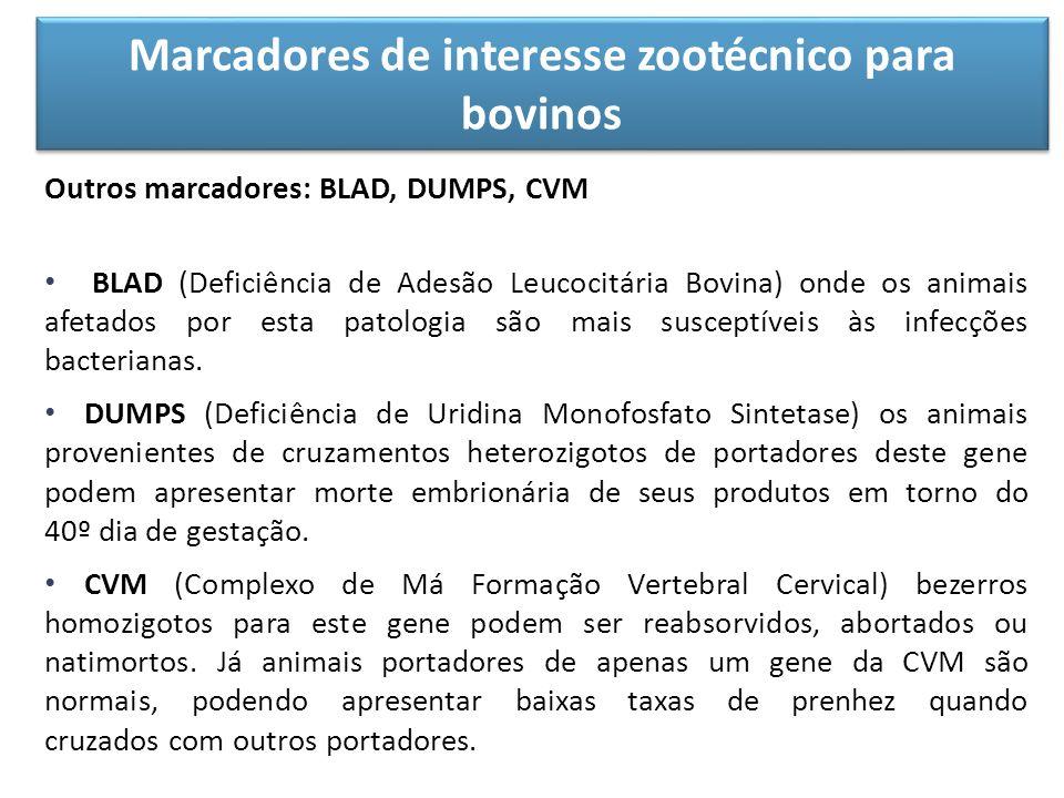 Marcadores de interesse zootécnico para bovinos Outros marcadores: BLAD, DUMPS, CVM BLAD (Deficiência de Adesão Leucocitária Bovina) onde os animais a