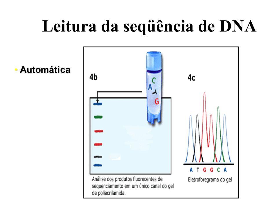 Leitura da seqüência de DNA Manual Manual G A T C