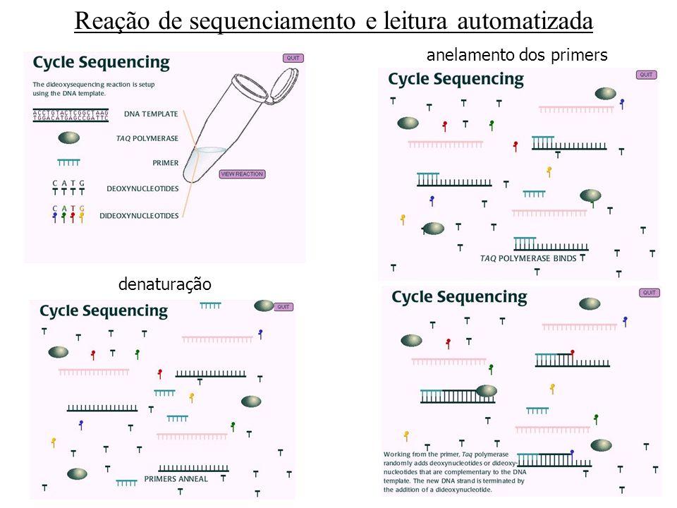 Automática Automática Leitura da seqüência de DNA