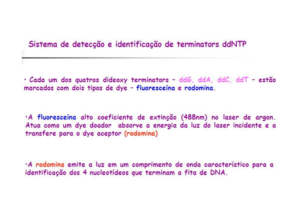 DYEnamic ET Terminators – Pré Mix Energy Transfer Dyes Fluorescein Donor Dye Standard Rhodamine Acceptor Dyes Fluorescein-R110-ddGTP Fluorescein-R6G-d