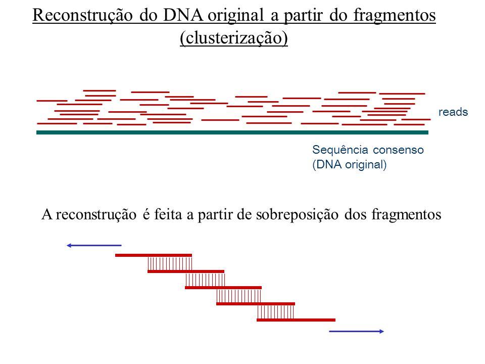 Quebrar em pedaços aleatórios ~2000pb (shotgun) DNA genômico clonar em vetor sequenciamento reads Shotgun do genoma inteiro