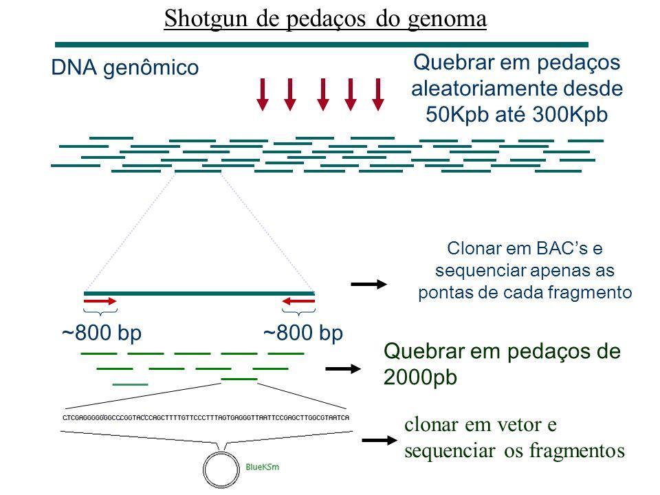 Reconstrução do DNA original a partir do fragmentos (clusterização) reads Sequência consenso (DNA original) A reconstrução é feita a partir de sobrepo