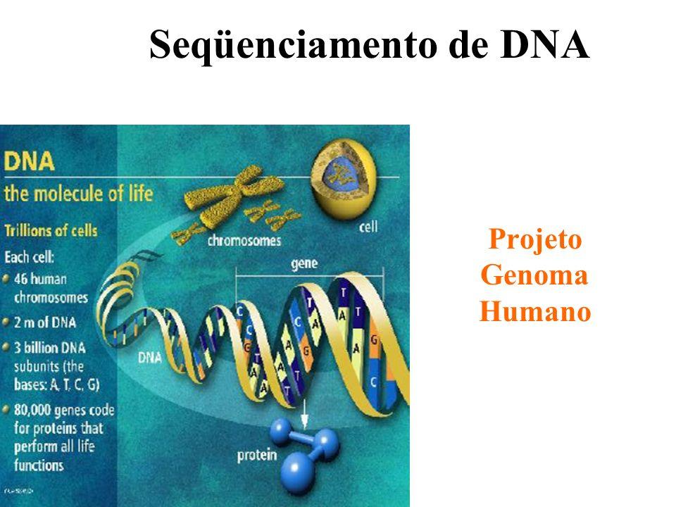 Frederick Sanger Prêmio Nobel de medicina e fisiologia em 1980 J. Mol. Biol. v.94, p. 441-448, 1975 Walter Gilbert Prêmio Nobel de medicina e fisiolog