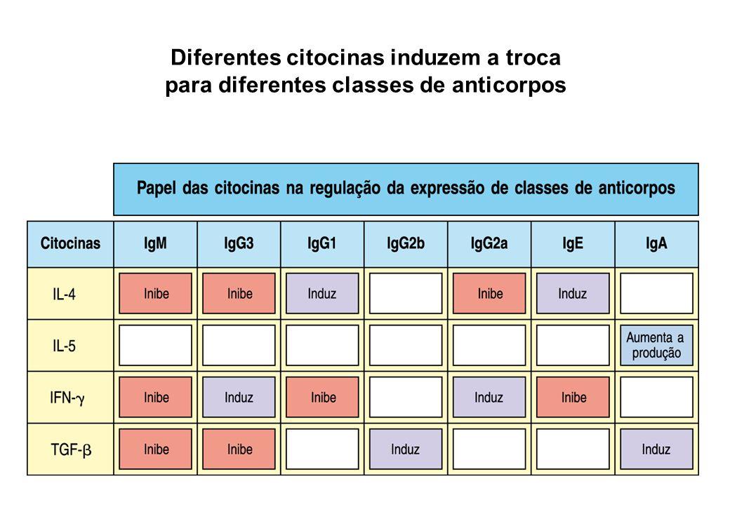 Diferentes citocinas induzem a troca para diferentes classes de anticorpos