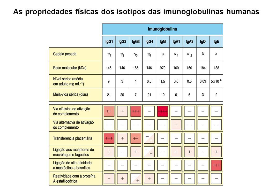As propriedades físicas dos isotipos das imunoglobulinas humanas