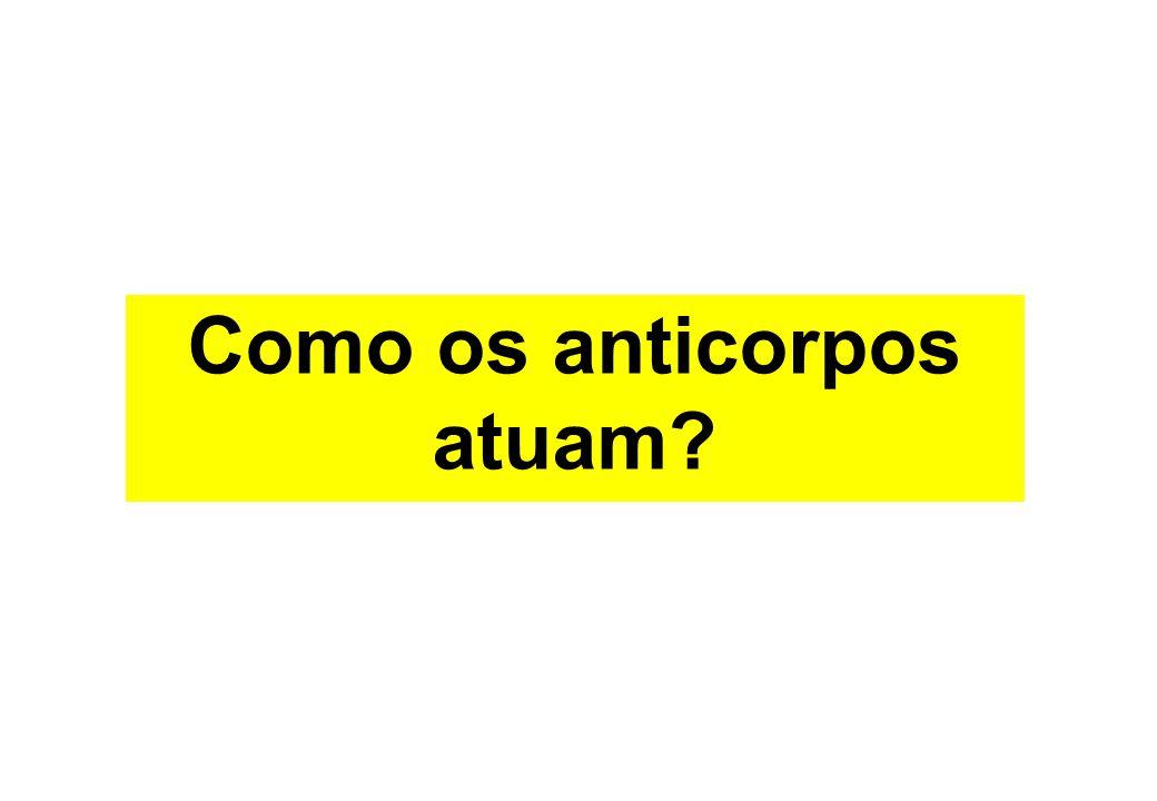 Como os anticorpos atuam?