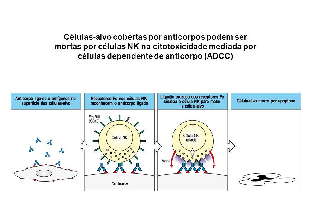 Células-alvo cobertas por anticorpos podem ser mortas por células NK na citotoxicidade mediada por células dependente de anticorpo (ADCC)