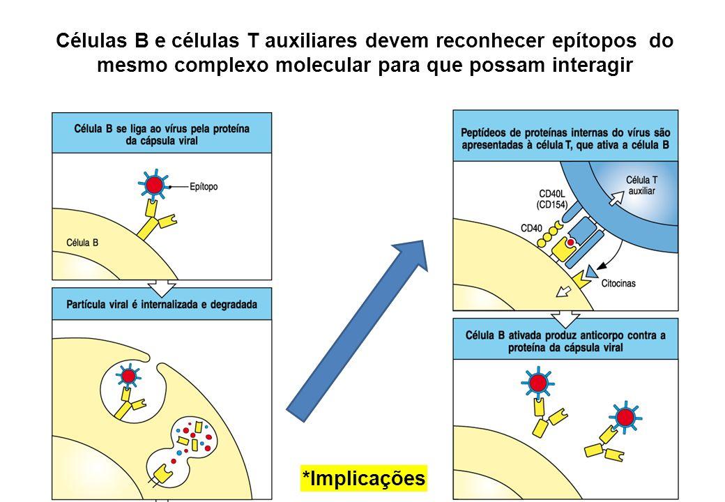 Células B e células T auxiliares devem reconhecer epítopos do mesmo complexo molecular para que possam interagir *Implicações