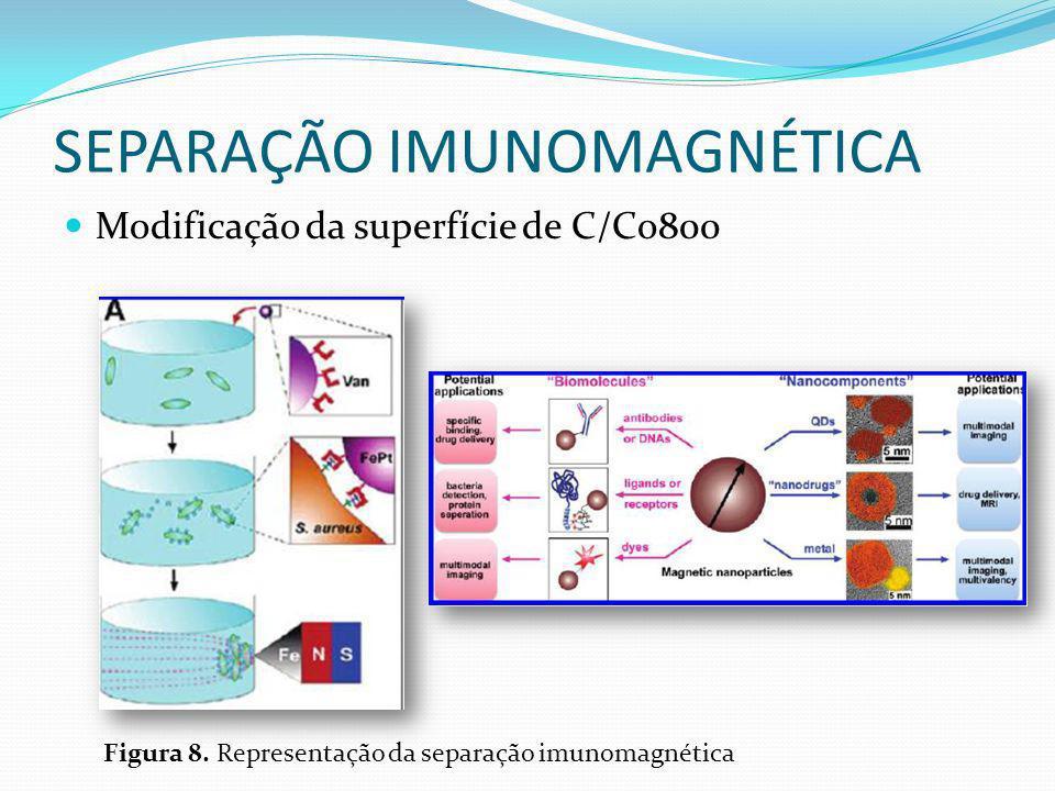 SEPARAÇÃO IMUNOMAGNÉTICA Modificação da superfície de C/Co800 Figura 8. Representação da separação imunomagnética