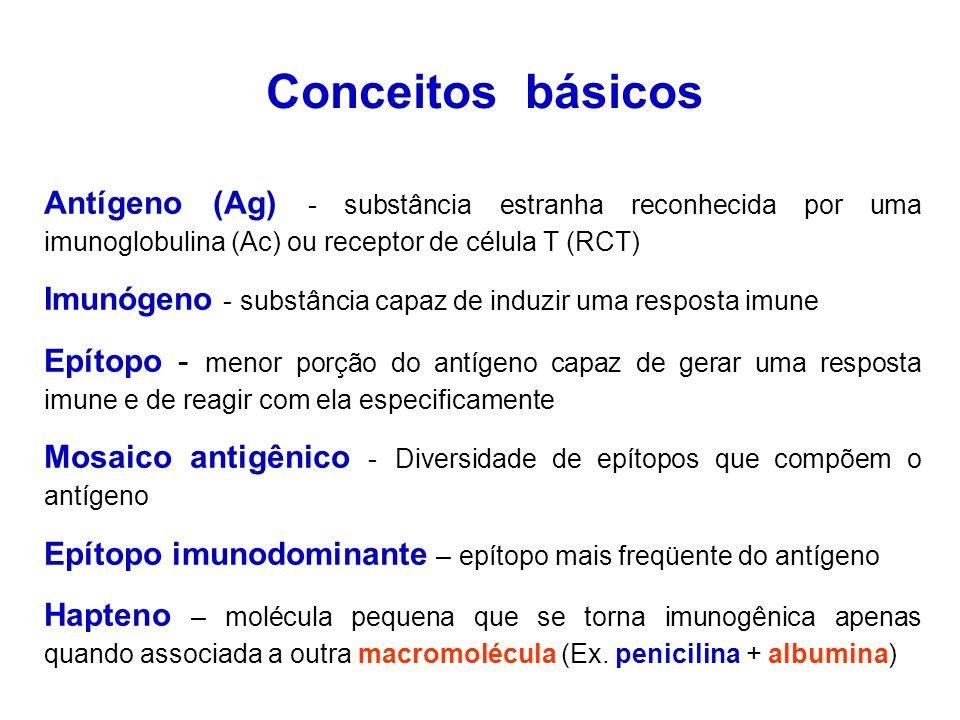 Conceitos básicos Antígeno (Ag) - substância estranha reconhecida por uma imunoglobulina (Ac) ou receptor de célula T (RCT) Imunógeno - substância capaz de induzir uma resposta imune Epítopo - menor porção do antígeno capaz de gerar uma resposta imune e de reagir com ela especificamente Mosaico antigênico - Diversidade de epítopos que compõem o antígeno Epítopo imunodominante – epítopo mais freqüente do antígeno Hapteno – molécula pequena que se torna imunogênica apenas quando associada a outra macromolécula (Ex.