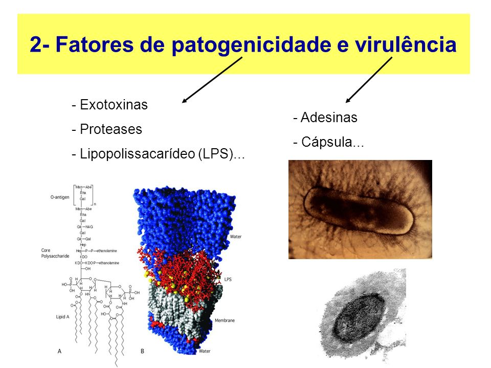 2- Fatores de patogenicidade e virulência - Exotoxinas - Proteases - Lipopolissacarídeo (LPS)...