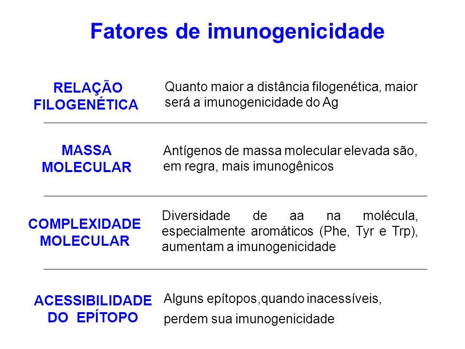 Fatores de imunogenicidade Antígenos de massa molecular elevada são, em regra, mais imunogênicos Diversidade de aa na molécula, especialmente aromáticos (Phe, Tyr e Trp), aumentam a imunogenicidade Alguns epítopos,quando inacessíveis, perdem sua imunogenicidade Quanto maior a distância filogenética, maior será a imunogenicidade do Ag RELAÇÃO FILOGENÉTICA MASSA MOLECULAR COMPLEXIDADE MOLECULAR ACESSIBILIDADE DO EPÍTOPO
