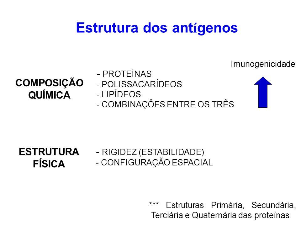 Fatores de imunogenicidade ANTÍGENOS DE MASSA MOLECULAR ELEVA- DA SÃO, EM REGRA, MAIS IMUNOGÊNICOS DIVERSIDADE DE AA NA MOLÉCULA, ES- PECIALMENTE AROMÁTICOS (TIROSINA), AUMENTAM A CAPACIDADE IMUNOGÊNICA ALGUNS EPÍTOPOS,QUANDO INACESSÍVEIS, PERDEM SUA IMUNOGENICIDADE QUANTO MAIOR A DISTÂNCIA FILOGE- NÉTICA, MAIOR SERÁ A IMUNOGENICI- DADE DO Ag RELAÇÃO FILOGENÉTICA MASSA MOLECULAR COMPLEXIDADE MOLECULAR ACESSIBILIDADE DO EPÍTOPO