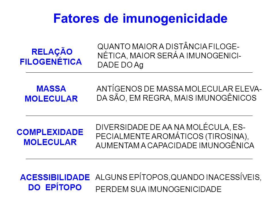Fatores de imunogenicidade ANTÍGENOS DE MASSA MOLECULAR ELEVA- DA SÃO, EM REGRA, MAIS IMUNOGÊNICOS DIVERSIDADE DE AA NA MOLÉCULA, ES- PECIALMENTE AROM
