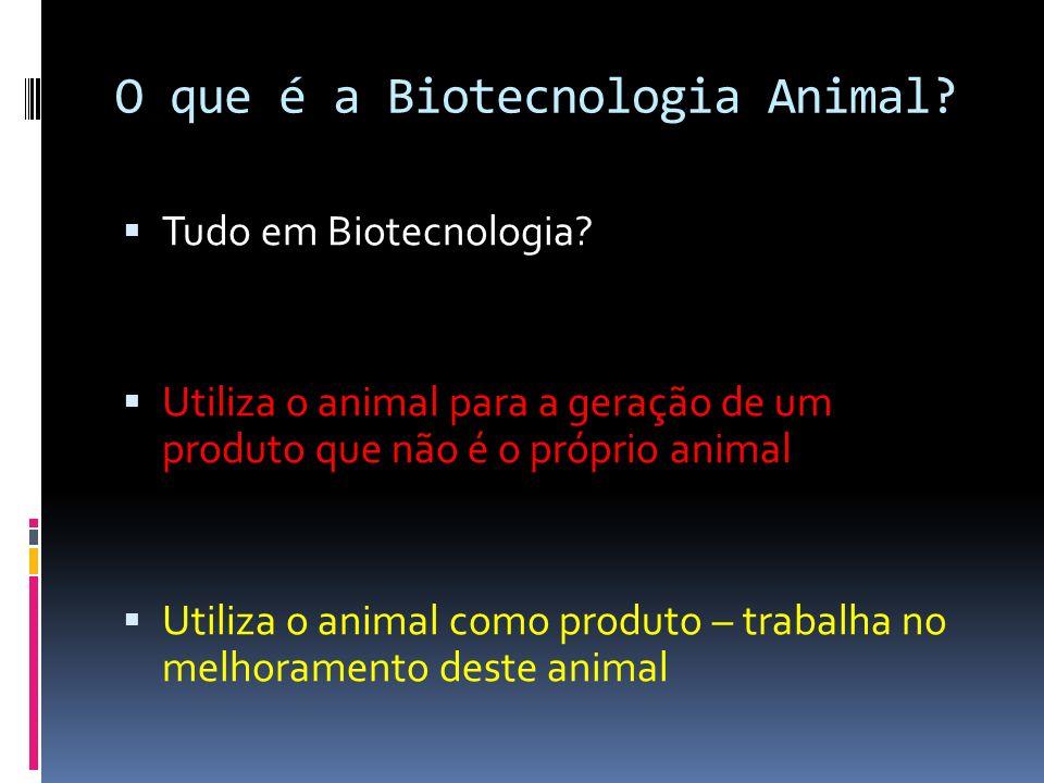 O que é a Biotecnologia Animal? Tudo em Biotecnologia? Utiliza o animal para a geração de um produto que não é o próprio animal Utiliza o animal como
