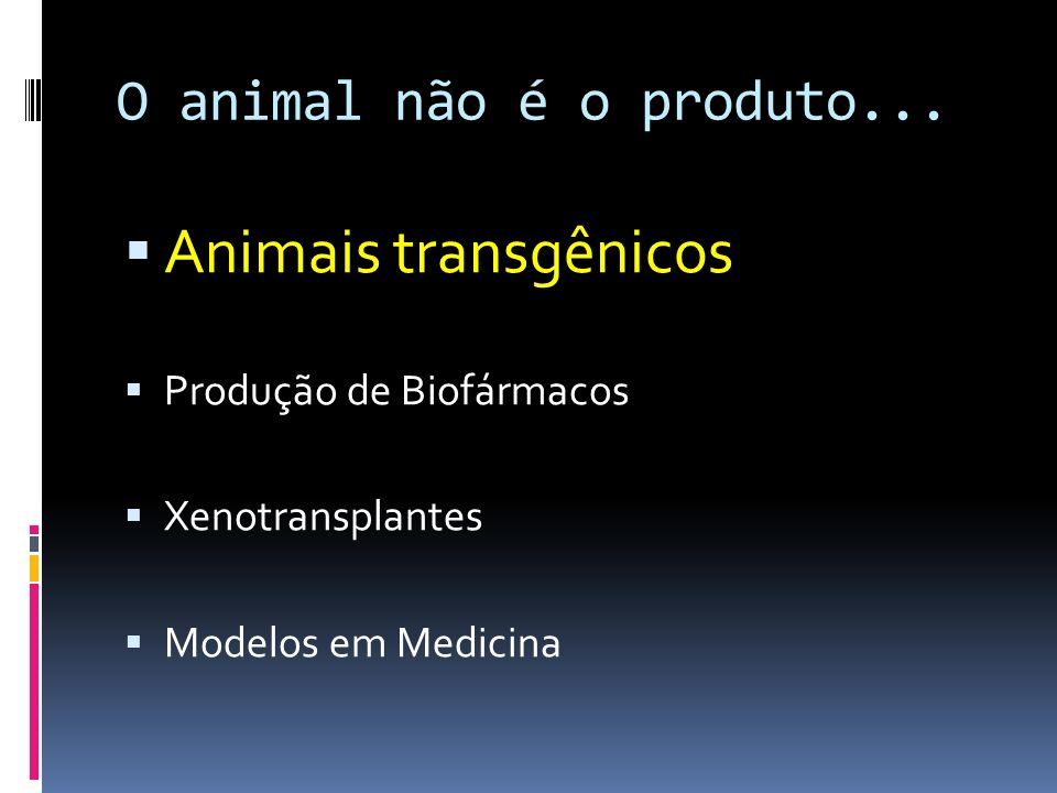 O animal não é o produto... Animais transgênicos Produção de Biofármacos Xenotransplantes Modelos em Medicina