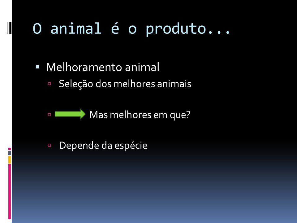 O animal é o produto... Melhoramento animal Seleção dos melhores animais Mas melhores em que? Depende da espécie
