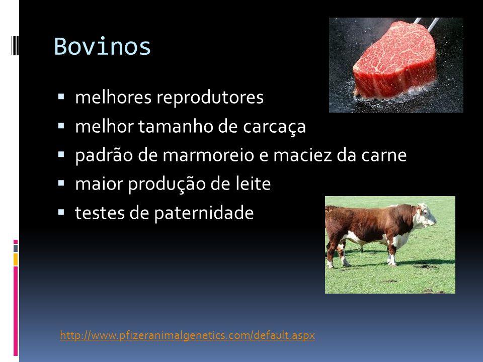 Bovinos melhores reprodutores melhor tamanho de carcaça padrão de marmoreio e maciez da carne maior produção de leite testes de paternidade http://www