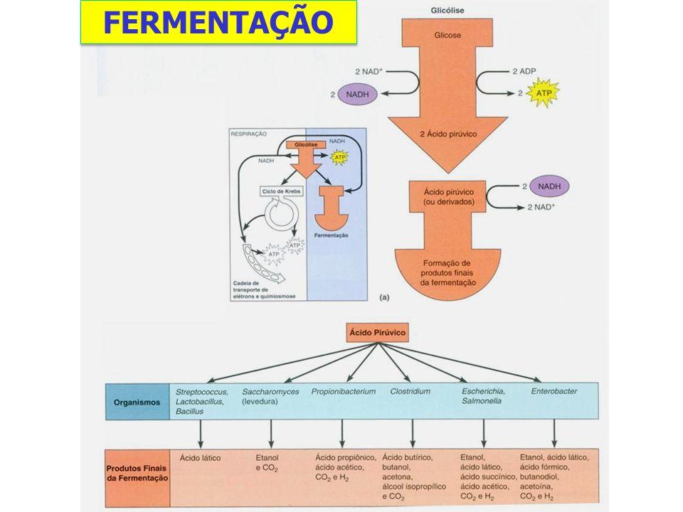 Produção de iogurte Produto resultante da ação do Lactobacillus bulgaricus e Streptococcus thermophilus ***O iogurte é consumido principalmente por suas características organolépticas e não por suas qualidades nutritivas e possíveis propriedades terapêuticas