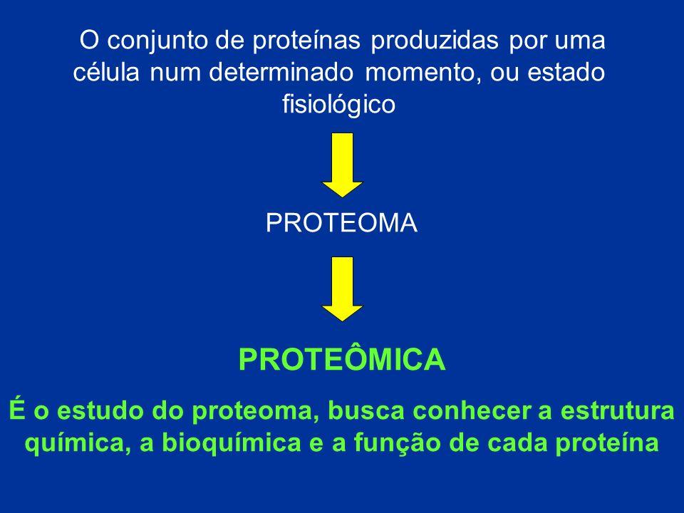 PROTEOMA O conjunto de proteínas produzidas por uma célula num determinado momento, ou estado fisiológico PROTEÔMICA É o estudo do proteoma, busca con