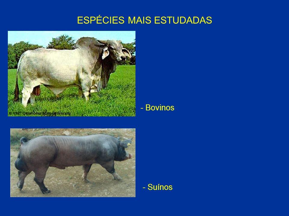ESPÉCIES MAIS ESTUDADAS - Bovinos - Suínos