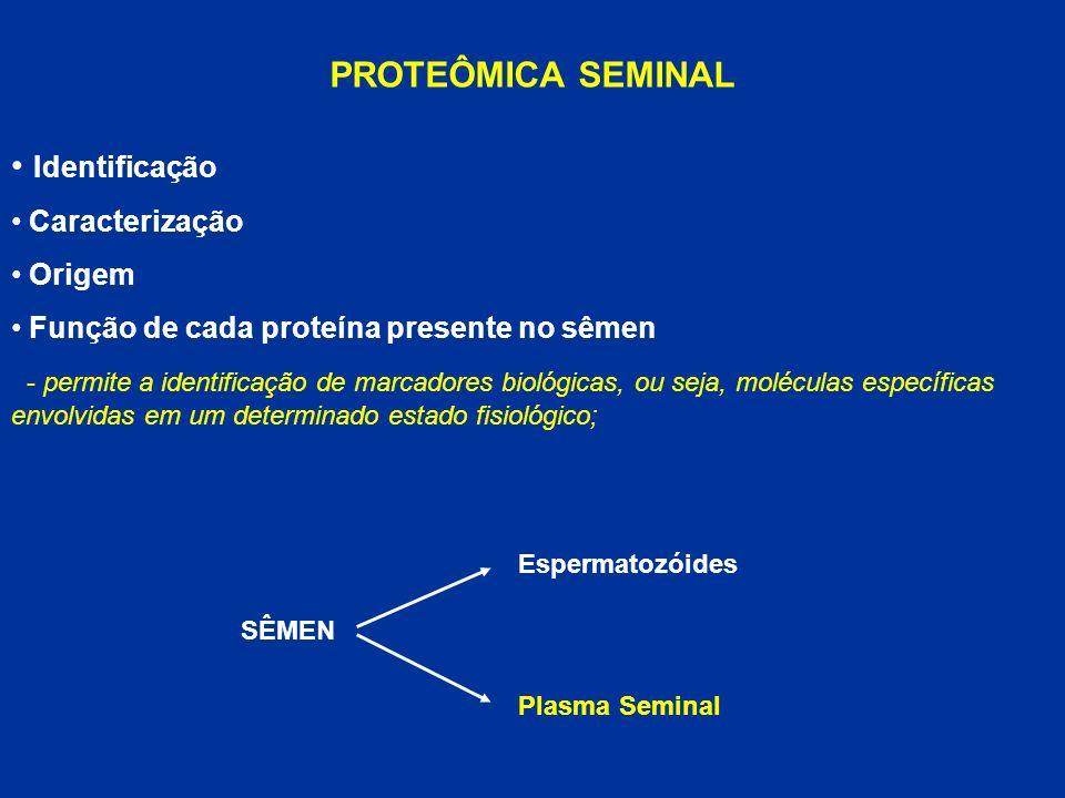 PROTEÔMICA SEMINAL Identificação Caracterização Origem Função de cada proteína presente no sêmen - permite a identificação de marcadores biológicas, o