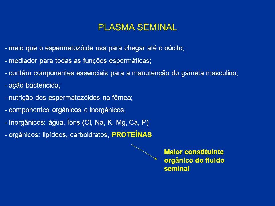 PLASMA SEMINAL - meio que o espermatozóide usa para chegar até o oócito; - mediador para todas as funções espermáticas; - contém componentes essenciai