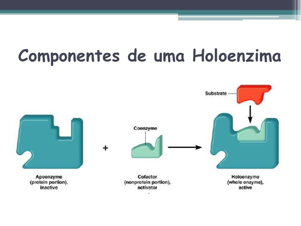 Componentes de uma Holoenzima