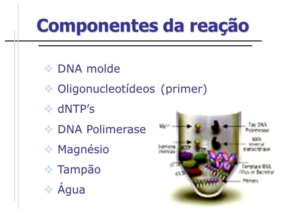 DESNATURAÇÃO ANELAMENTO POLIMERIZAÇÃO ETAPAS DA PCR