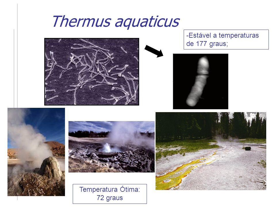 Thomas D. Brock no lago do Yellowstone National Park de onde foi isolado o Thermus aquaticus