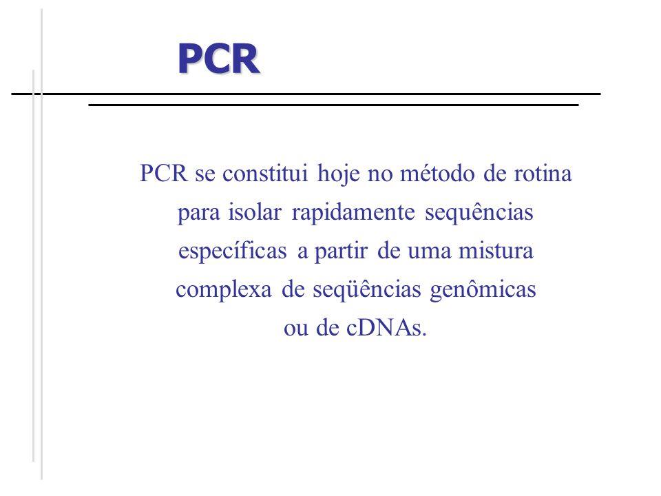 Programa 94 0 C por 5 min 94 0 C por 1 min 55 0 C por 1 min 72 0 C por 1 min 72 0 C por 5 min 4 0 C 35 ciclos PCR CICLOS