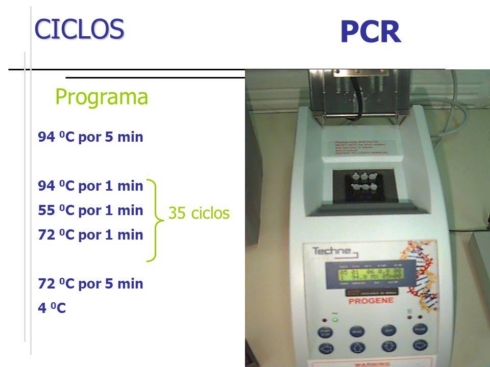 O ciclo da PCR