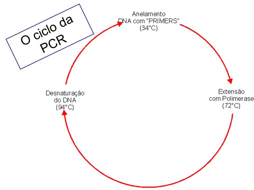 ETAPAS -Extração de DNA -Desenho dos Primers -Reação de PCR - Análise dos resultados