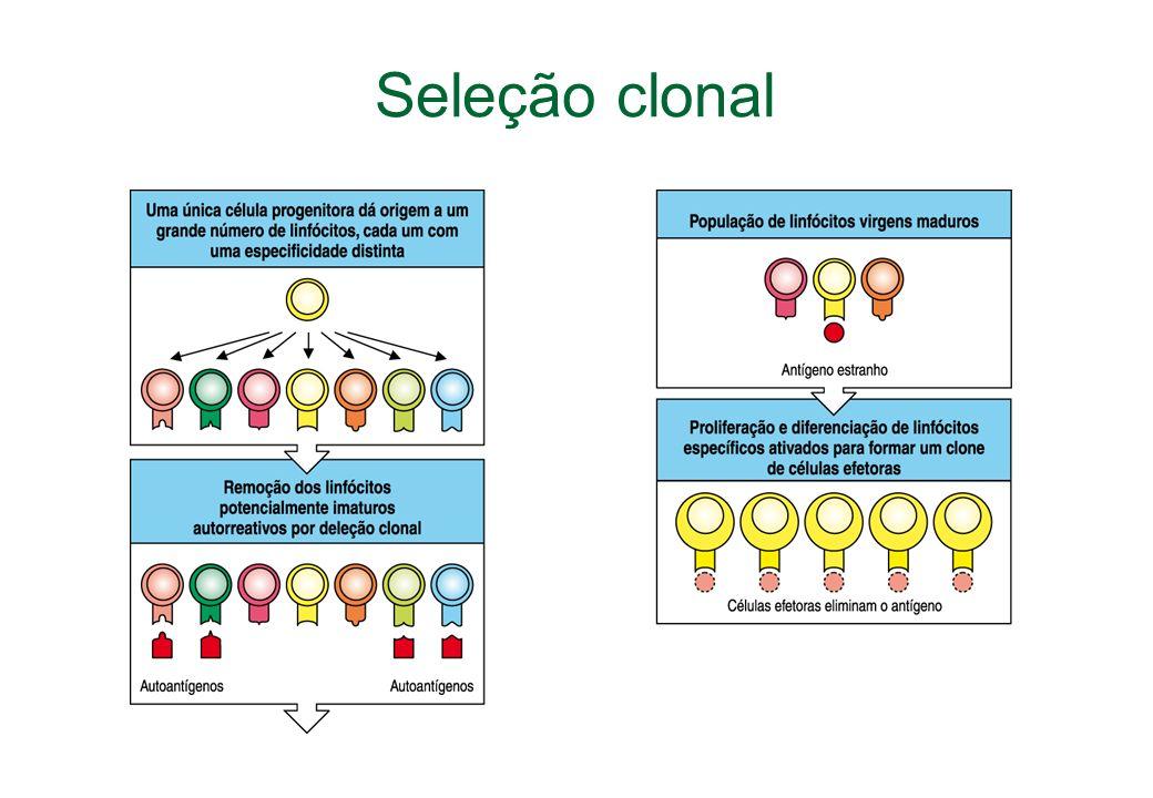 Seleção clonal