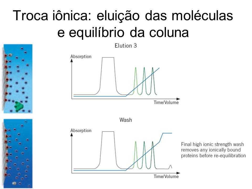 Troca iônica: eluição das moléculas e equilíbrio da coluna