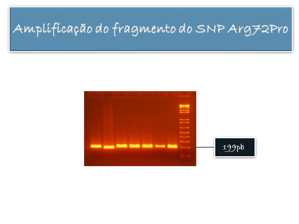 199pb Amplificação do fragmento do SNP Arg72Pro