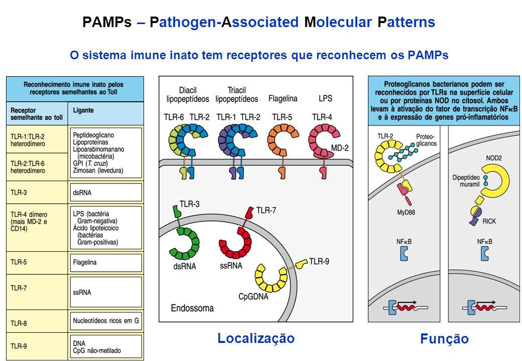 PAMPs – Pathogen-Associated Molecular Patterns O sistema imune inato tem receptores que reconhecem os PAMPs Localização Função